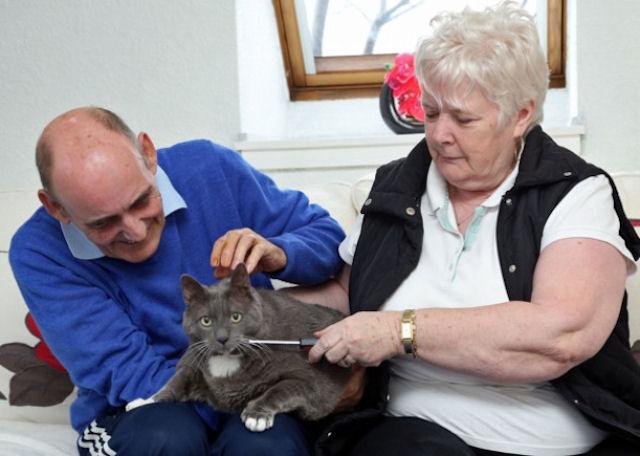 В австралийского кота всадили 11 пуль