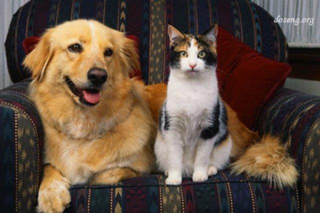 В ближайшем будущем люди смогут разговаривать с животными