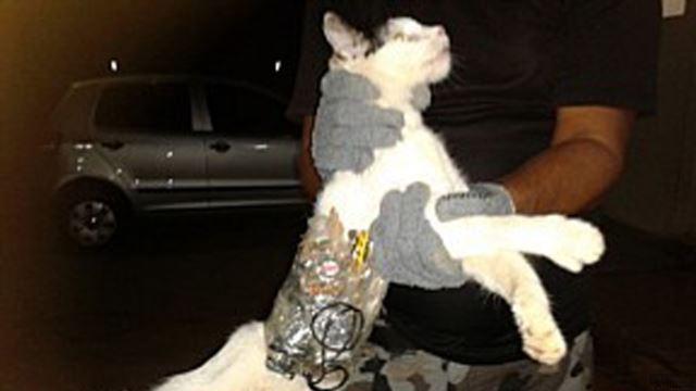 В Бразилии поймали кота-контрабандиста