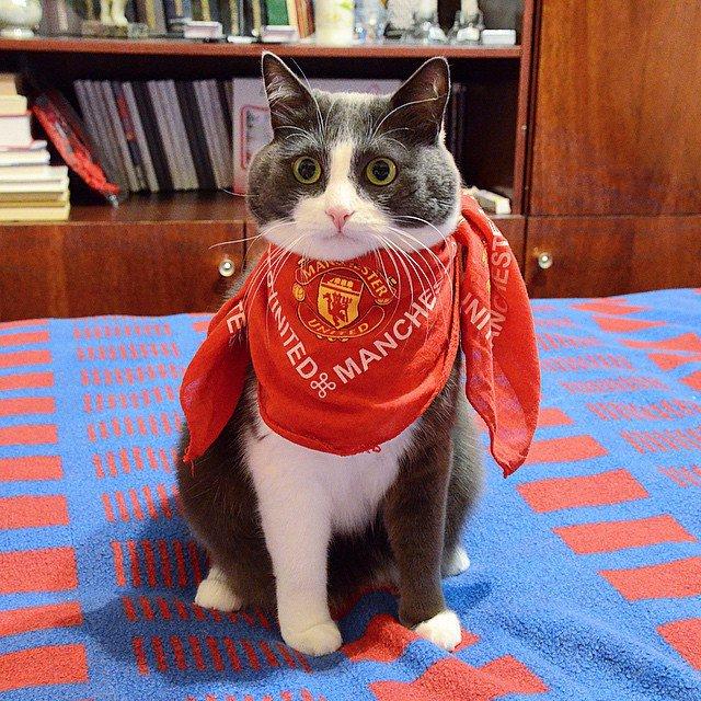 В Челябинске живёт кот, который болеет за Манчестер Юнайтед