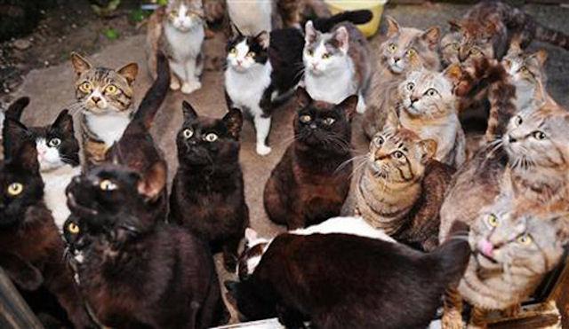 В доме уфимки живут 60 кошек