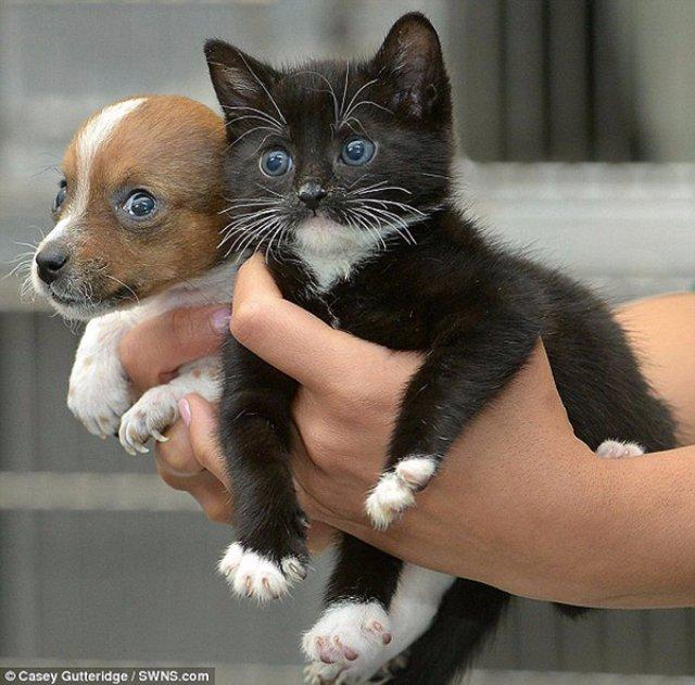 В Екатеринбурге установили бэби-боксы для кошек и собак