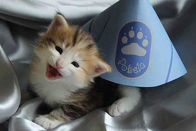 В Финляндии кошка стала сотрудником полиции