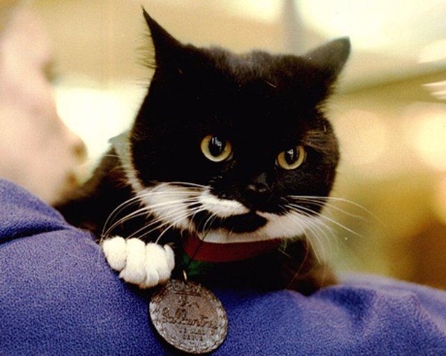 В Финляндии впервые в истории котам присвоили звание героев