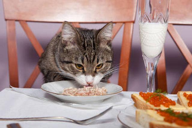 В Германии открылся ресторан для кошек