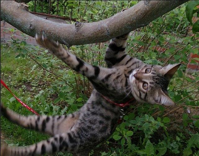 В Instagram набирает популярность кошка-экстрималка