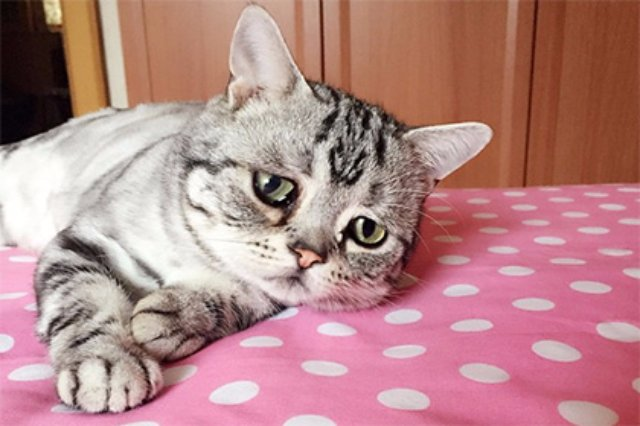 В Instagram новая звезда — пессимистичная кошка