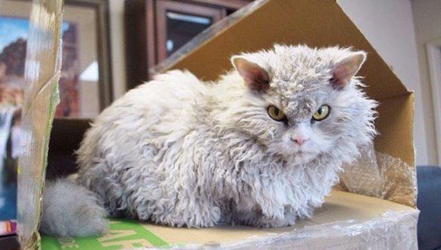 В Instagram новая звезда - высокомерный кот