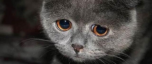 В Интернете «играют» на котах