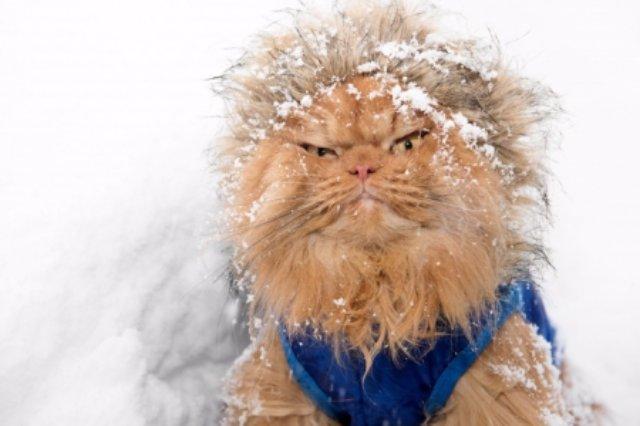 В Интернете новая звезда — кот Гарфи с демоническим взглядом