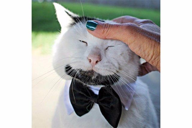 В Калифорнии живёт бородатый кот