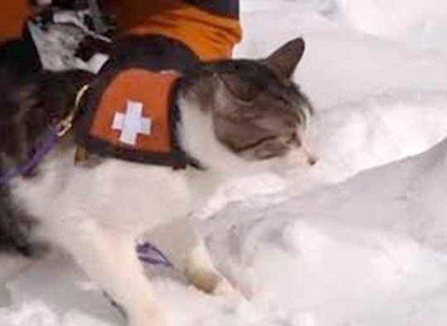 В Канаде кошки спасают людей от лавин