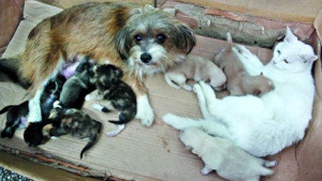 В Китае образовалась кошачье-собачья семья