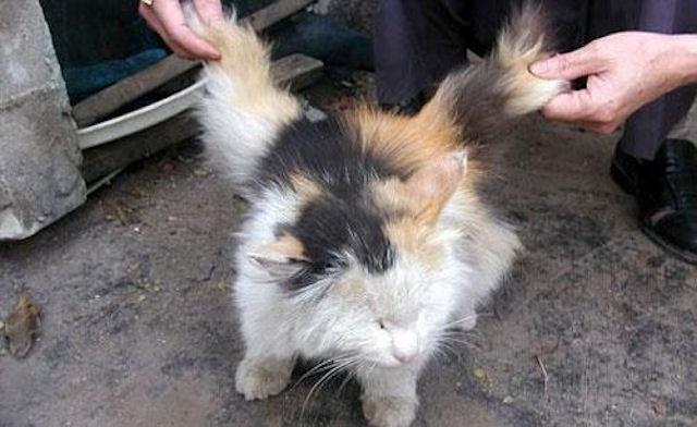 В Китае живёт крылатый кот