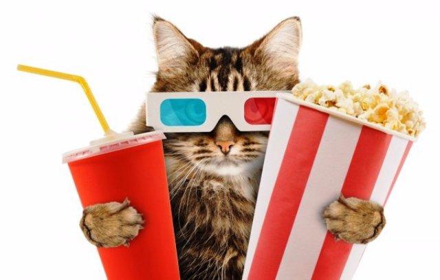 В Лондоне откроется первый в мире кинотеатр с кошками