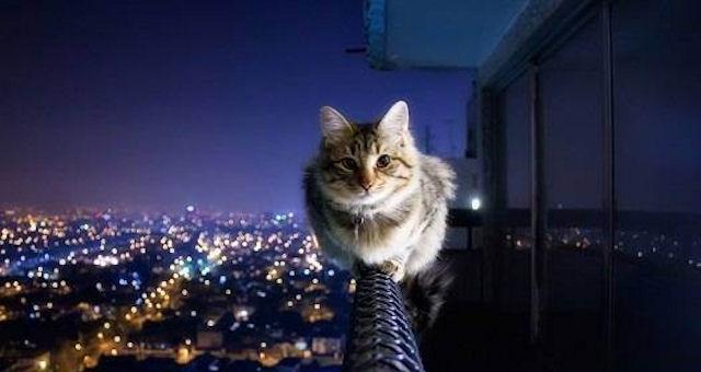 В Магнитогорске состоялся кошачий забег