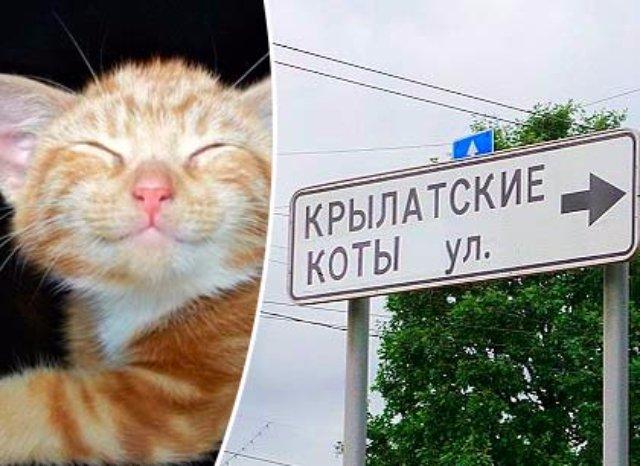 В Москве появилась кошачья улица