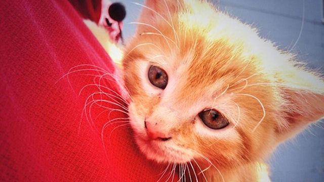 В мусорном баке нашли котёнка