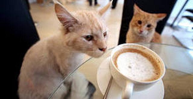 В Париже вошло в моду кофепитие с кошкой на коленях