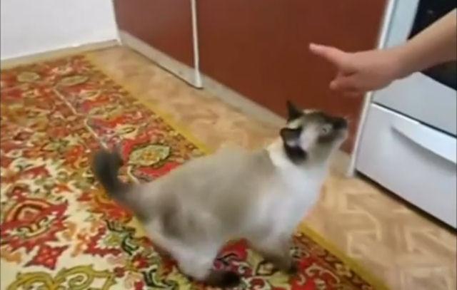 В России завёлся котопёс