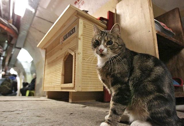 В Санкт-Петербурге презентовали анимационный фильм о котах