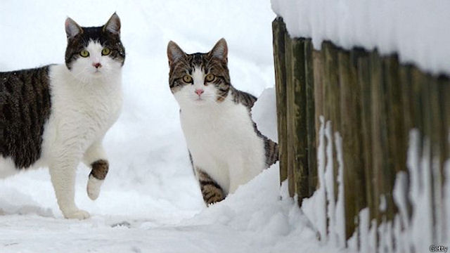 В Швейцарии введут семейную квоту на кошек?