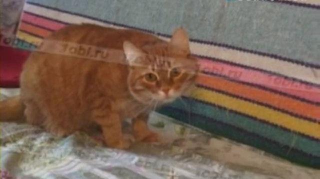 В Снежинске ветеринары спасли кота, оказавшегося в плену детских шалостей