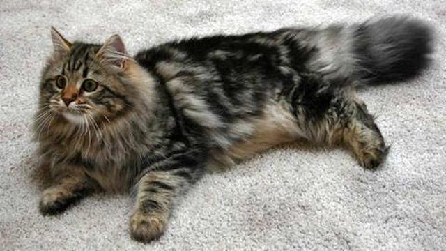 В суде Челябинска развернулась настоящая борьба за кошку и котят
