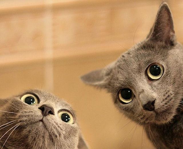 В Татарстане арестовали двух котов