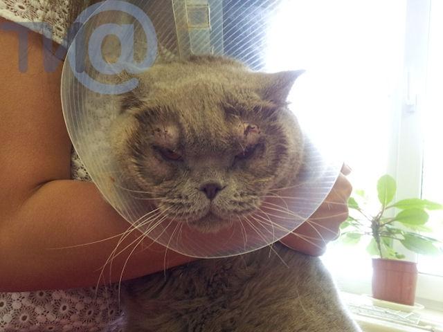 В Твери прооперировали кошку с редким недугом