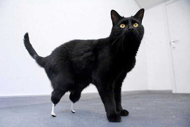 В Великобритании коту сделали уникальную операцию