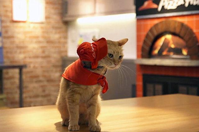 В Японии котов использовали для рекламы продукции сети пиццерий