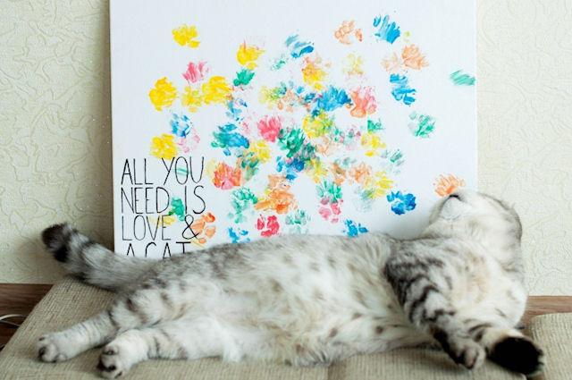 В Запорожье живёт кот - Пикассо