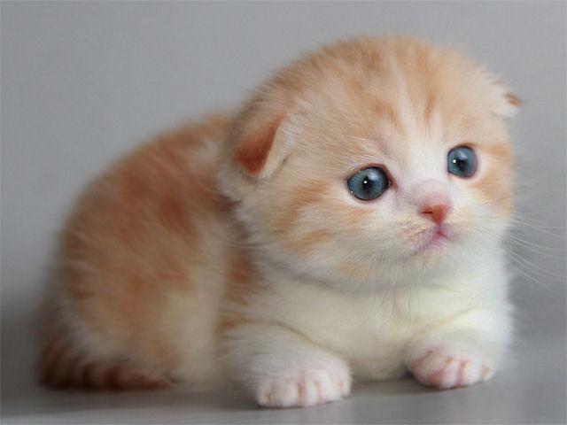 маленькие вислоухие котята фото