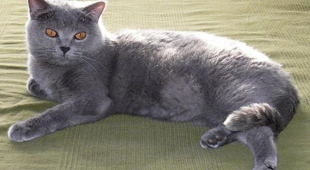 Владелец кошки умер от бешенства после укуса своей питомицы