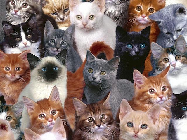 Власти отобрали у жителя Голландии 60 кошек