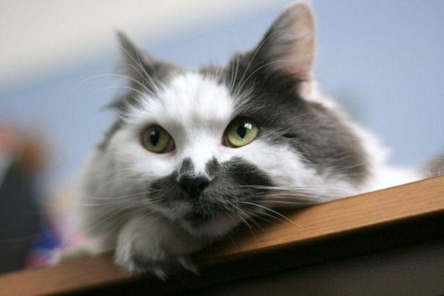 В Германии ищут кошачьих воров силами добровольцев