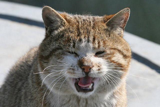 Возвращение голоса коту обошлось британке в 10 тысяч фунтов