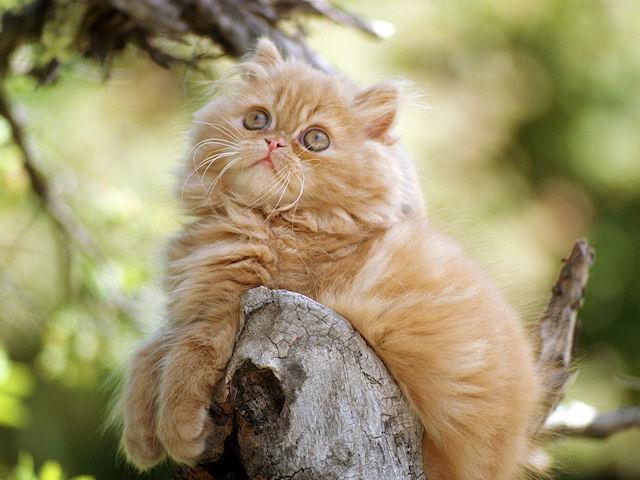 Выставка кошек «Домой!» приглашает гостей!