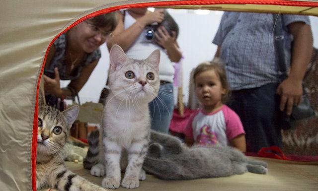 Грандиозная выставка кошек в Уфе