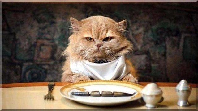 Выяснилось, почему кошки настолько переборчивы в еде