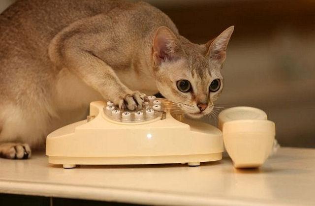 Кошка вызвала отряд спасателей, играя с телефоном