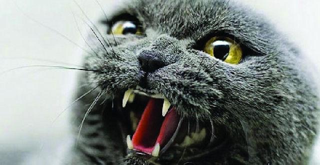 Хозяева стали заложниками своего взбесившегося кота