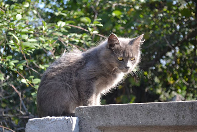 Хозяйка выгнала кота из дома за подозрения в гомосексуализме