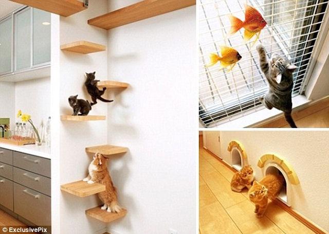 Японцы строят квартиры для кошек