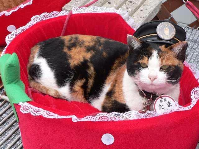 Япония лишилась знаменитой кошки Тамы