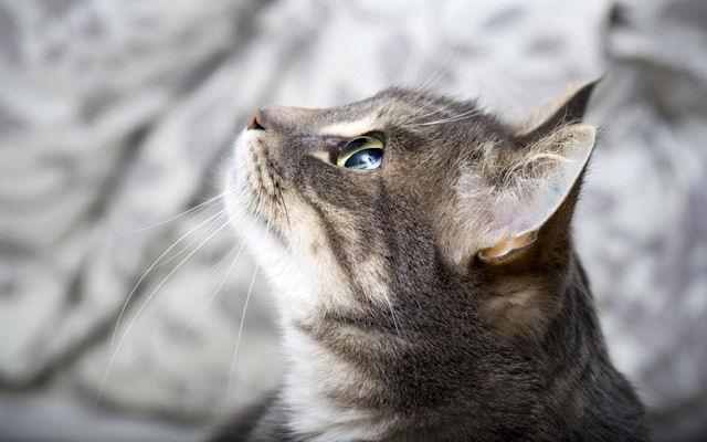 За поимку убийцы 25 кошек обещают около 18 тысячи долларов