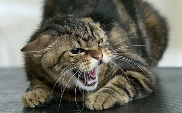 Женщина стала жертвой бешеной кошки