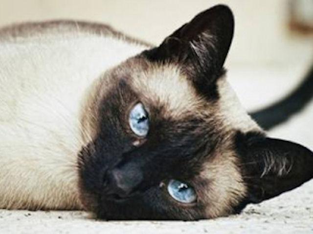 Житель Великобритании получил 20-недельный тюремный срок за попытку убить кошку