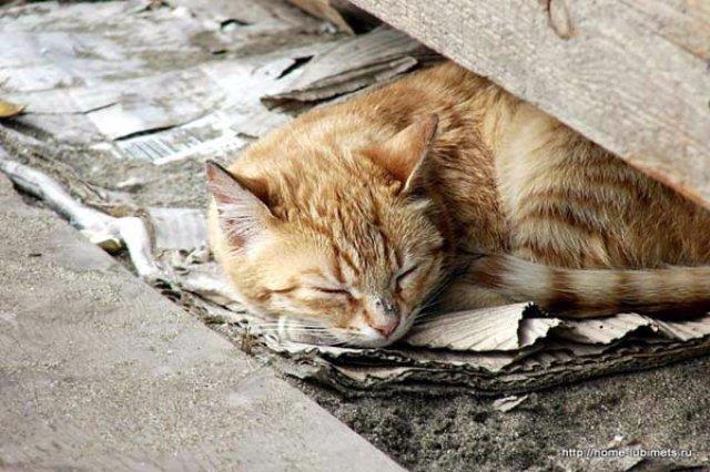Жители Огайо ополчились против кошек
